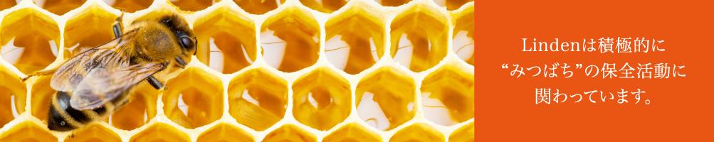 Lindenは積極的にミツバチの保全活動に関わっています。